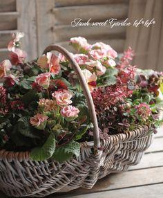 tef*tef*寄せ植え>2015 * no.16 *『スモーキーピンク』×ベージュの花かご Beautiful Flower Arrangements, Floral Arrangements, Container Plants, Container Gardening, Summer Flowers, Beautiful Flowers, Plant Basket, Garden Boxes, Bouquet
