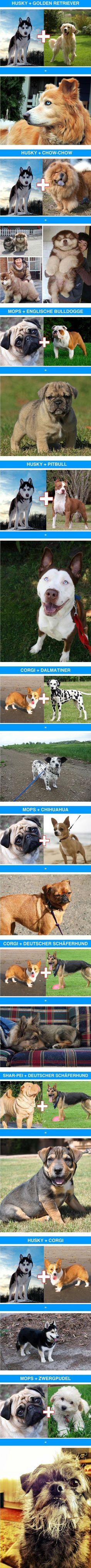 Funny cross-breeds - Imgur