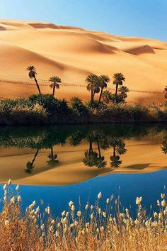 Um El Maoasis With Date Palms (phoenix Dactylifera), Erg Ubari, Sahara Libya Desert Oasis, Desert Life, Desert Art, Desert Photography, Landscape Photography, Beautiful World, Beautiful Places, Deserts Of The World, Amazing Nature
