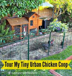 Tour Of My Tiny Chicken Coop
