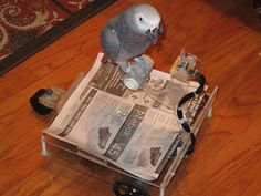 Bird buggy soothes a screeching parrot