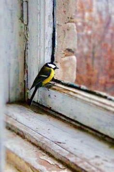Fly away, little bird Pretty Birds, Love Birds, Beautiful Birds, Animals Beautiful, Animals And Pets, Cute Animals, Tier Fotos, Little Birds, Bird Art