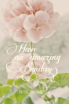Good Morning And Happy Sunday Have An Amazing Day! Sunday Morning Quotes, Sunday Wishes, Happy Sunday Quotes, Morning Quotes Images, Good Morning Greetings, Good Morning Wishes, Good Morning Images, Sunday Messages, Weekend Quotes