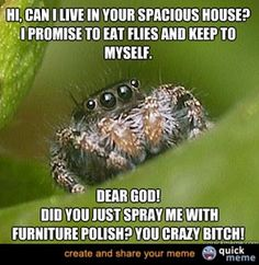 I try so hard to not want all the spiders dead, but it's just not happening.