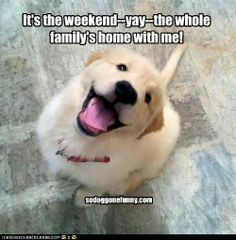 Image result for happy weekend puppy
