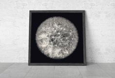 Dandelion Art, Dandelion photo, Botanical Print, Macro Photography, Black And White / Dandelion