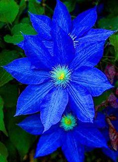 Exotic Flowers, Amazing Flowers, Pretty Flowers, Colorful Flowers, White Flowers, Tropical Flowers, Yellow Roses, Purple Flowers, Pink Roses