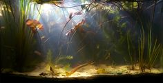 Okay, so you have decided that you want to own an aquarium. It is a good idea to make out a wish list before purchasing any fish for the aquarium. Planted Aquarium, Aquarium Aquascape, Aquarium Nano, Aquarium Terrarium, Mini Aquarium, Aquarium Landscape, Nature Aquarium, Aquarium Fish Tank, Aquariums Super