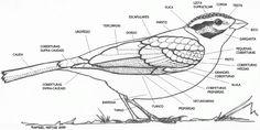Resultado de imagem para pedro salgado ilustração cientifica