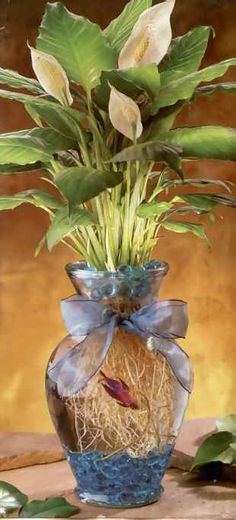 This is a nice How-To on how to make your own Betta fish in a vase. The fish provides natural fertilizer for the plant...plus you don't need to water it daily. :)