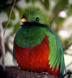 I want to see a Quetzal bird in person someday!