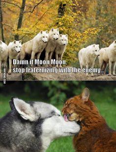 Damn it Moon Moon! I'm so convinced that Nanuq is Moon Moon. Animal Jokes, Funny Animal Memes, Dog Memes, Cute Funny Animals, Funny Animal Pictures, Funny Cute, Funny Dogs, Funny Memes, Hilarious