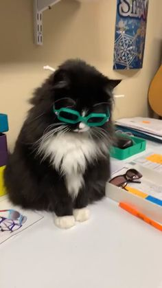 Truffles and her new glasses - Tiere - Katzen Funny Animal Videos, Cute Funny Animals, Cute Baby Animals, Animals And Pets, Cute Cats, Funny Cats, I Love Cats, Crazy Cats, Beautiful Cats