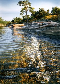"""Shells in the Sunshine"" watercolor painting by artist Carol Evans. Perfectly transparent water shows the light above and shell-covered ocean floor beneath. Beautiful trees and rocks. Watercolor Landscape, Landscape Art, Landscape Paintings, Watercolor Paintings, Watercolours, Watercolor Artists, Watercolor Paper, Art Aquarelle, Illustration"