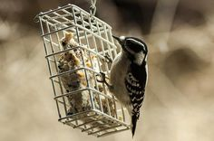 Fall is a great time to get your bird feeders in tip top shape for the winter feeding season.