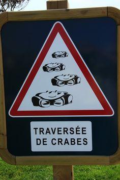 Traversée de crabes