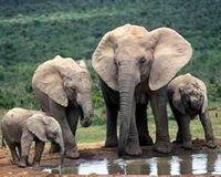 Don't Destroy Endangered Elephant Habitat