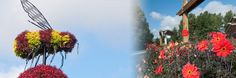 April 2014 in Coquitlam's Inspiration Garden British Columbia, Garden, Plants, Inspiration, Biblical Inspiration, Garten, Lawn And Garden, Gardens, Plant