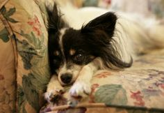Veterinary hospice allows pet owners to say goodbye at home : Lifestyles