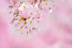 Spring Pink Flowers Background