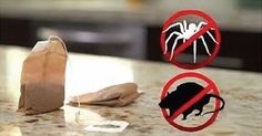 Get 1 Teabag and You Will Never See Mice and Spiders in the Home! via @healthsociety