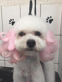 -repinned- Subtle creative dog grooming
