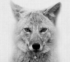 Coyote Art Woodlands Nursery Wall Print Woodlands by LILAxLOLA