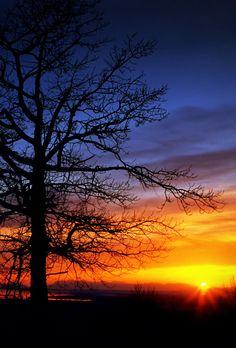 dranilj1:  The Sunset Tree