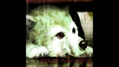 """[HQ]Wolf's Rain OST 2 Track 1 - """"heaven's not enough"""""""