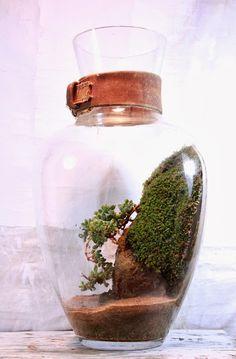 Terrarium/hanging/ - the slug and the squirrel Vivarium, Paludarium, Bonsai, Terrarium Plants, Succulent Terrarium, Moss Garden, Succulents Garden, Air Plants, Indoor Plants