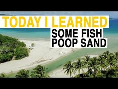 TIL: These White Sand Beaches Aren't What You Think - YouTube