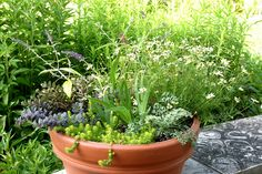 A container of perennials.