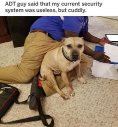 memes — iFunny ADT guy said that my current security system was useless, but cuddly. – popular memes on the site ADT guy said that my current security system was useless, but cuddly. – popular memes on the site Funny Animal Memes, Dog Memes, Funny Animal Videos, Cute Funny Animals, Funny Cute, Corgi Funny, Funny Dogs, Cute Puppies, Cute Dogs