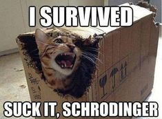 Funny pictures about Schrodinger's Cat Final Results. Oh, and cool pics about Schrodinger's Cat Final Results. Also, Schrodinger's Cat Final Results photos. Funny Shit, Funny Cats, Funny Animals, Hilarious, Farm Animals, Funny Stuff, Funny Animal Pictures, Funny Images, Random Pictures