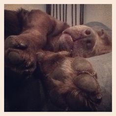 Bonus el osito - el mejor perro del mundo
