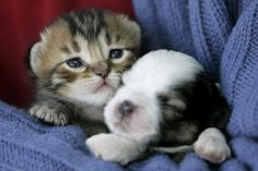 infant puppy and kitten.