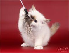 DEMI as a little kitten