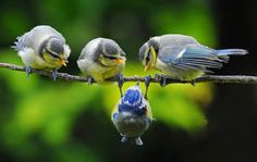 Bird Photography would be the purest form for any nature photographer. Hence forth, what would a bird photographer or a plain nature lover expect or Cute Birds, Pretty Birds, Beautiful Birds, Animals Beautiful, Funny Birds, Animals And Pets, Funny Animals, Cute Animals, Tier Fotos