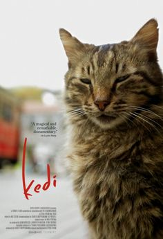 Kedi-The Cats of Istanbul, a documentary