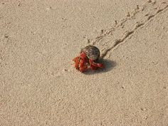 Hermit Crab by DS355, via Flickr