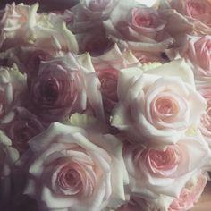 Somos como una flor La poésie des roses | kindredfloral
