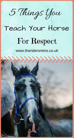 Horse Care TipsYou can find Horse care tips and more on our website.Horse Care Tips Equestrian Outfits, Equestrian Fashion, Equestrian Style, Equestrian Problems, Horse Fashion, Horse Behavior, Show Jumping Horses, Horse Information, Horse Riding Tips