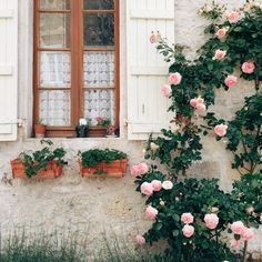 https://flic.kr/p/tp7pnV | #roses #windowportrait