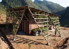 Bamboo toilet block by H&P Architects is covered in plants. http://www.dezeen.com/2015/01/06/toigetation-hp-architects-bamboo-toilet-block-vietnam-plant-covered/