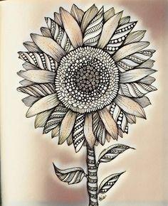 sunflower drawing zen doodle zentangles zentangle simple easy doodles drawings artsy tangled