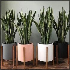 Easy and Fun Tips for Designing Your Indoor Garden living room Best Picture For house plants decor living room For Your Taste You are looking for something, and it is going to tell you exactly what yo Living Room Decor, Bedroom Decor, Plants For Living Room, Bedroom Plants Decor, Room With Plants, Decoration Plante, Design Jardin, Best Indoor Plants, Indoor Plant Decor