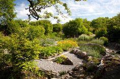 Organic herb garden at the Burren Perfumery