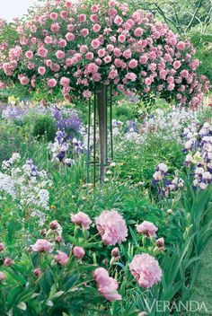 Standard Rose, Poppies and Peonies - Monets Garden Inspiration in Giverny. Photo Jacques Dirand.