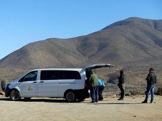 GALLERY | Whale Watching Chile Atacama desert picnic Whale Watching, Chile, Picnic, Wildlife, Van, Gallery, Chili Powder, Chili, Picnics