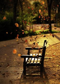 Fall Leaves On Park Bench